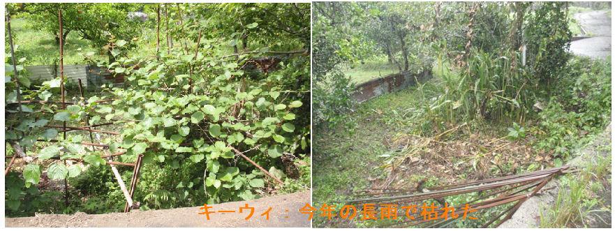 f:id:chuumeikun:20200912111011j:plain