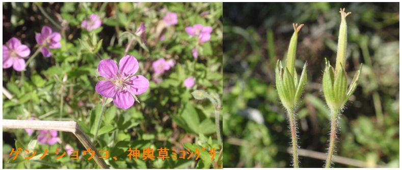f:id:chuumeikun:20200915220201j:plain
