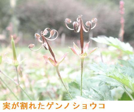 f:id:chuumeikun:20200915220315j:plain