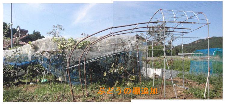 f:id:chuumeikun:20200920200834j:plain
