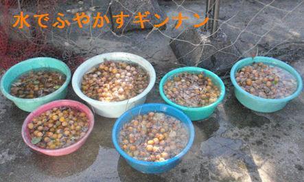 f:id:chuumeikun:20200920201106j:plain