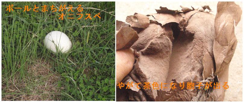 f:id:chuumeikun:20200927184552j:plain