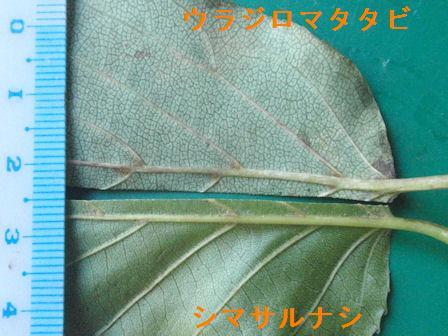 f:id:chuumeikun:20200929195613j:plain