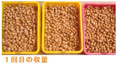 f:id:chuumeikun:20201003083000j:plain