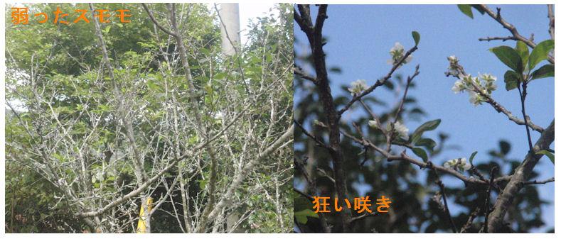 f:id:chuumeikun:20201006053418j:plain