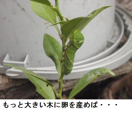 f:id:chuumeikun:20201012192116j:plain
