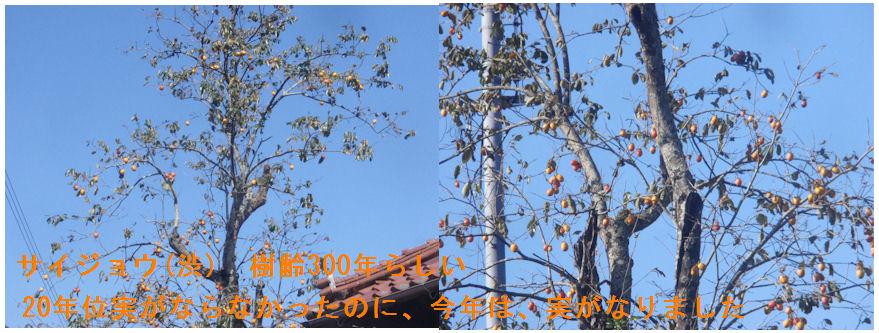 f:id:chuumeikun:20201016121625j:plain