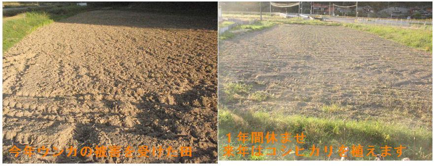 f:id:chuumeikun:20201016121835j:plain