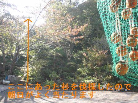 f:id:chuumeikun:20201018193241j:plain