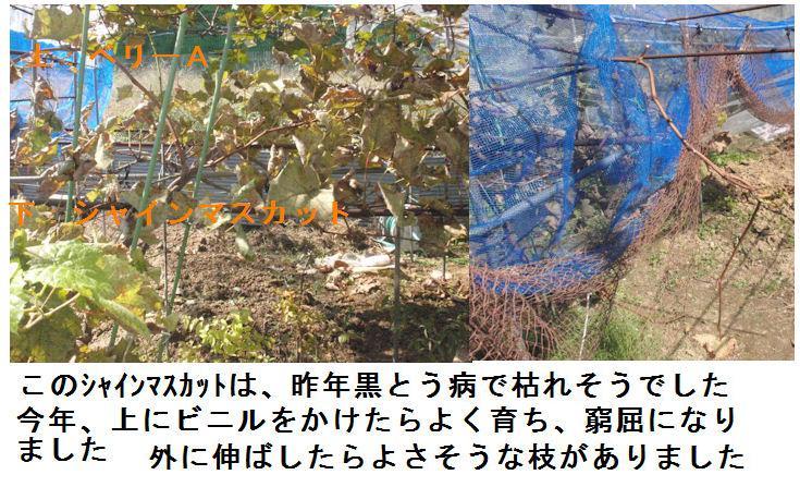 f:id:chuumeikun:20201018194001j:plain