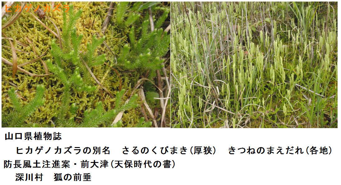 f:id:chuumeikun:20201105175252j:plain
