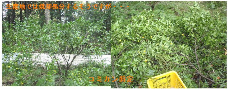 f:id:chuumeikun:20201106184146j:plain