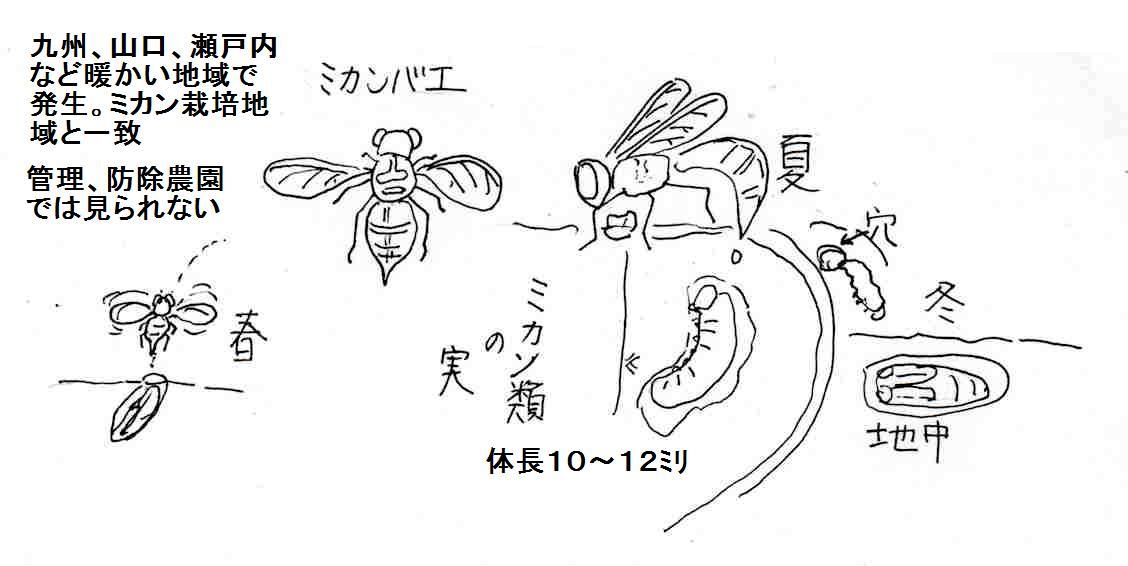 f:id:chuumeikun:20201106184507j:plain