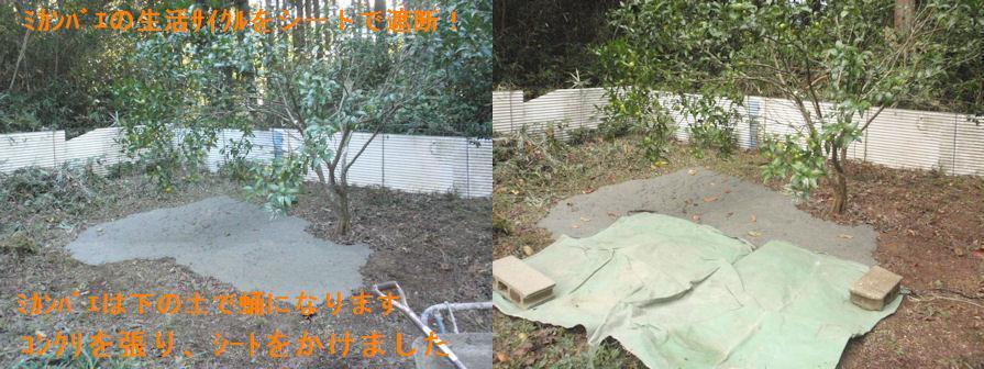 f:id:chuumeikun:20201106184706j:plain
