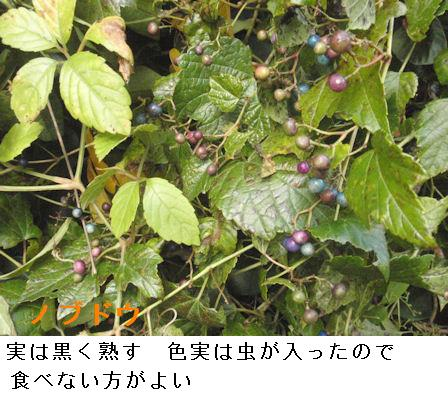 f:id:chuumeikun:20201111094915j:plain