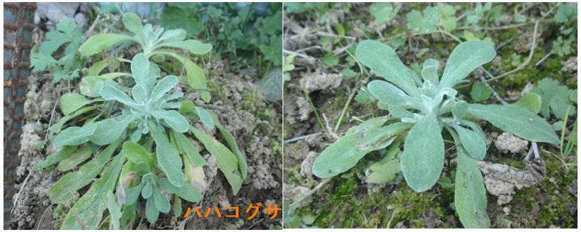f:id:chuumeikun:20201121184922j:plain