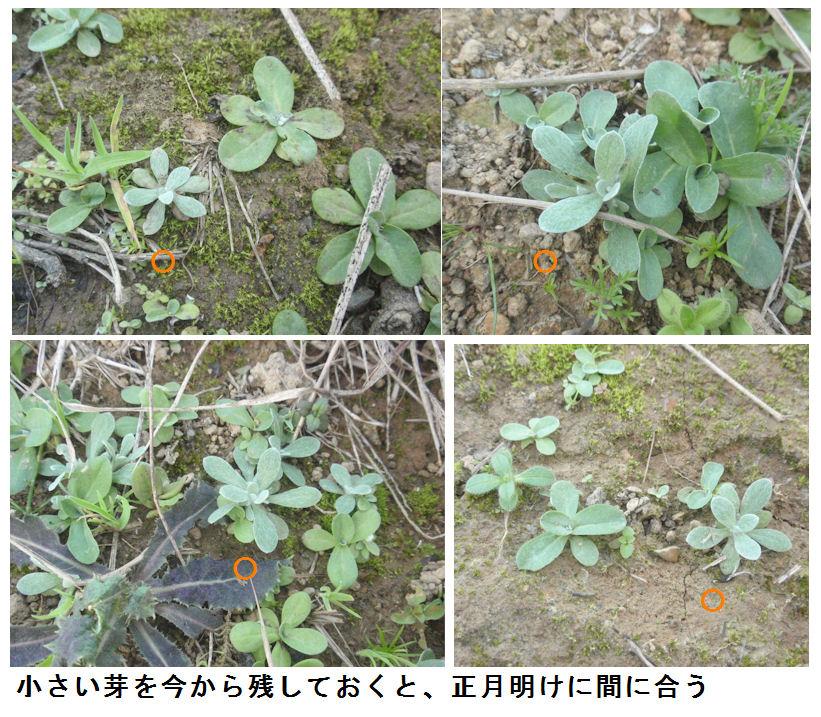 f:id:chuumeikun:20201121185204j:plain
