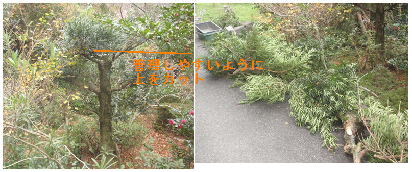 f:id:chuumeikun:20201123005912j:plain