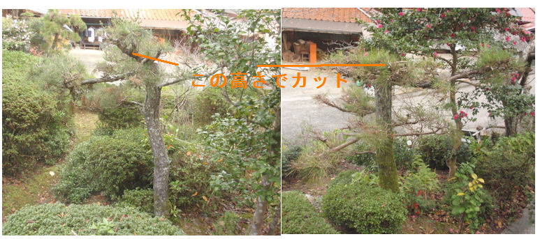 f:id:chuumeikun:20201123010217j:plain