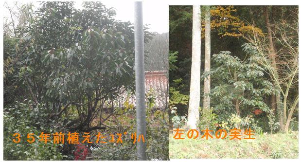 f:id:chuumeikun:20201218211810j:plain