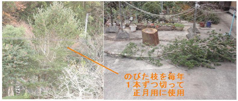 f:id:chuumeikun:20201220211218j:plain