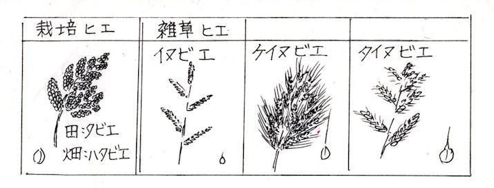 f:id:chuumeikun:20210105003109j:plain