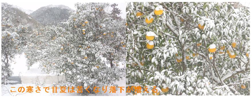f:id:chuumeikun:20210111153238j:plain