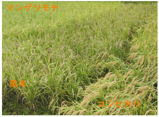 f:id:chuumeikun:20210115202137j:plain