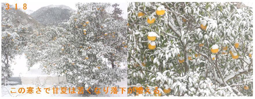f:id:chuumeikun:20210125182822j:plain