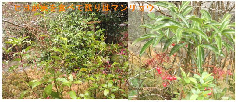 f:id:chuumeikun:20210127120052j:plain
