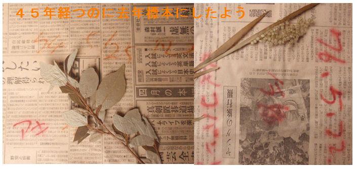 f:id:chuumeikun:20210127120616j:plain