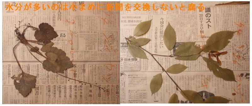 f:id:chuumeikun:20210127120658j:plain