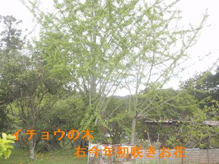 f:id:chuumeikun:20210415144500j:plain