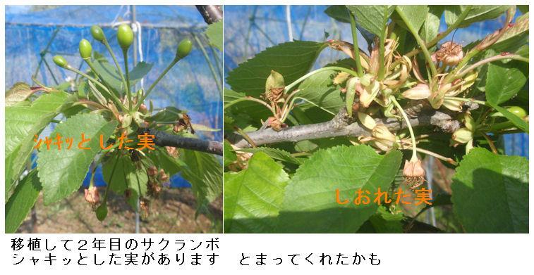 f:id:chuumeikun:20210420065320j:plain