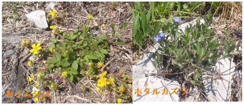 f:id:chuumeikun:20210421045514j:plain