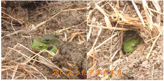 f:id:chuumeikun:20210502083140j:plain