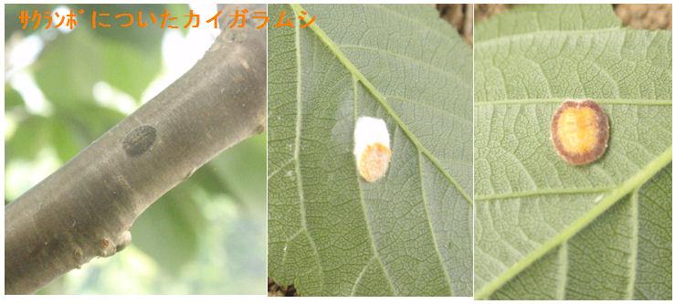 f:id:chuumeikun:20210508204341j:plain