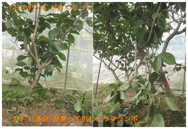 f:id:chuumeikun:20210508204507j:plain