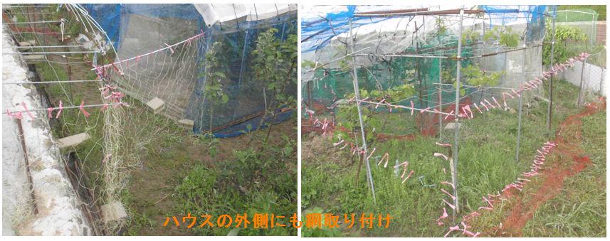 f:id:chuumeikun:20210508204936j:plain