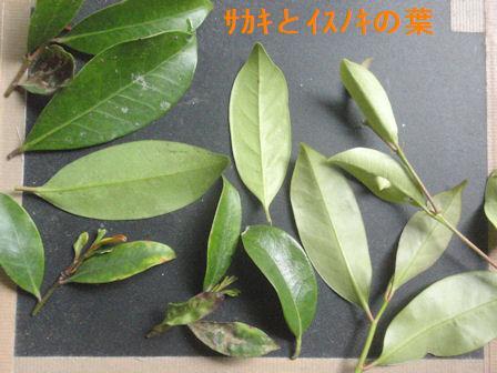 f:id:chuumeikun:20210510203543j:plain