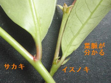 f:id:chuumeikun:20210510203601j:plain