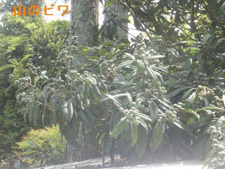 f:id:chuumeikun:20210511202502j:plain