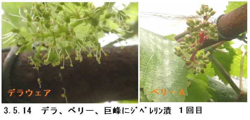 f:id:chuumeikun:20210514172638j:plain