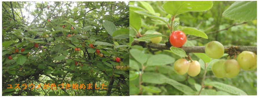 f:id:chuumeikun:20210516115518j:plain