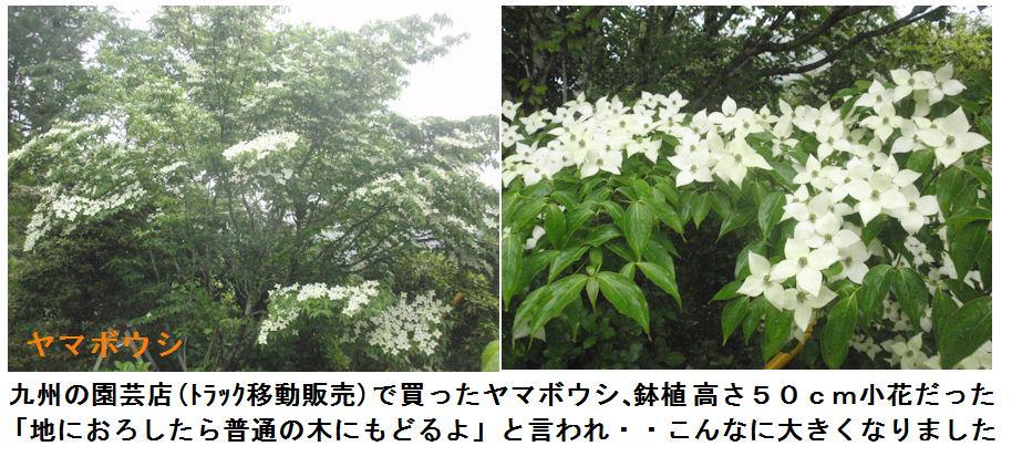 f:id:chuumeikun:20210518111601j:plain