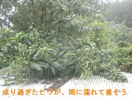 f:id:chuumeikun:20210518111648j:plain