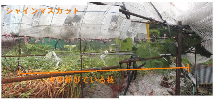 f:id:chuumeikun:20210518111823j:plain