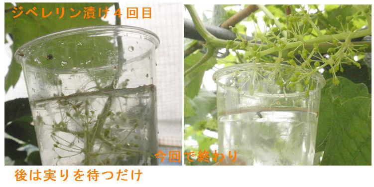 f:id:chuumeikun:20210606190458j:plain
