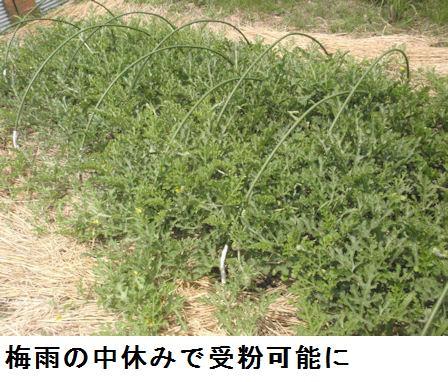 f:id:chuumeikun:20210606190612j:plain
