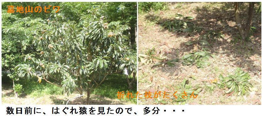 f:id:chuumeikun:20210609182656j:plain